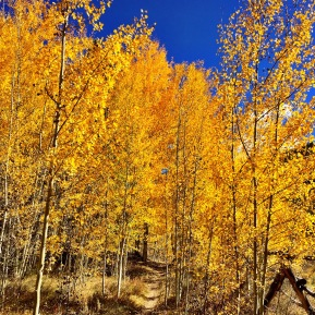 Fall In Love With Breck