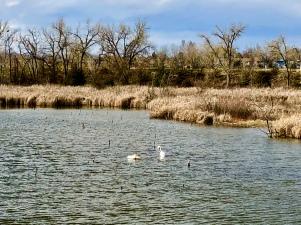 FoCo 7 Riverbend Ponds